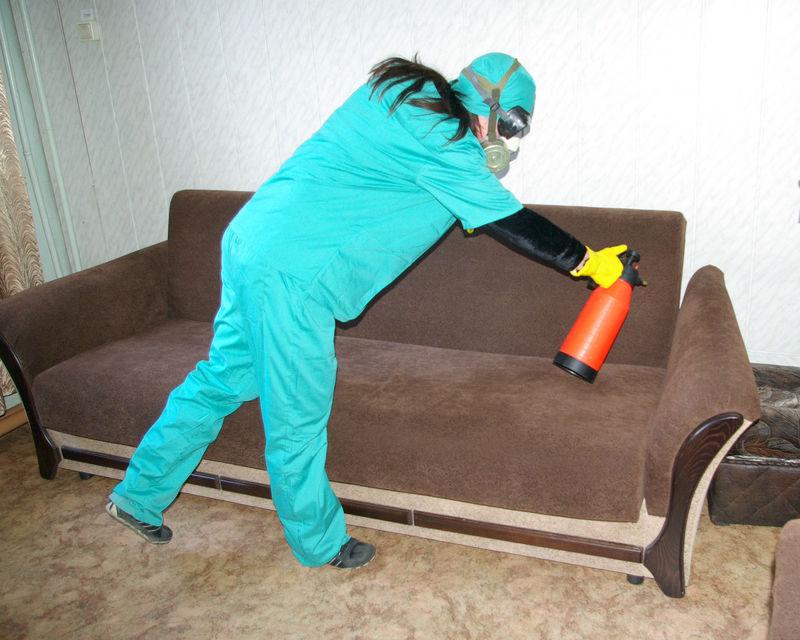 Как правильно травить постельных клопов в домашних условиях