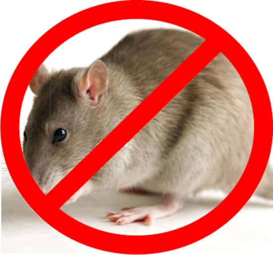 Картинки по запросу травля крыс в Краснодаре