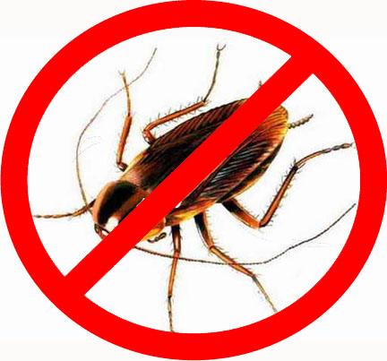 Картинки по запросу уничтожить тараканов