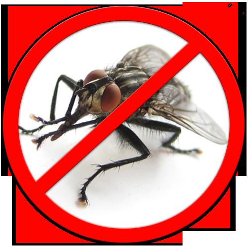 Как можно убить муху в домашних условиях